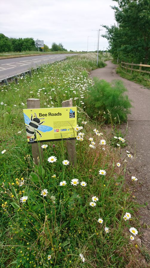 Bee roads: a flowery road verge
